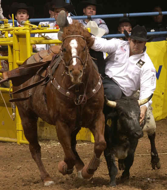 Rodeo steer wrestling with cowboy and horse