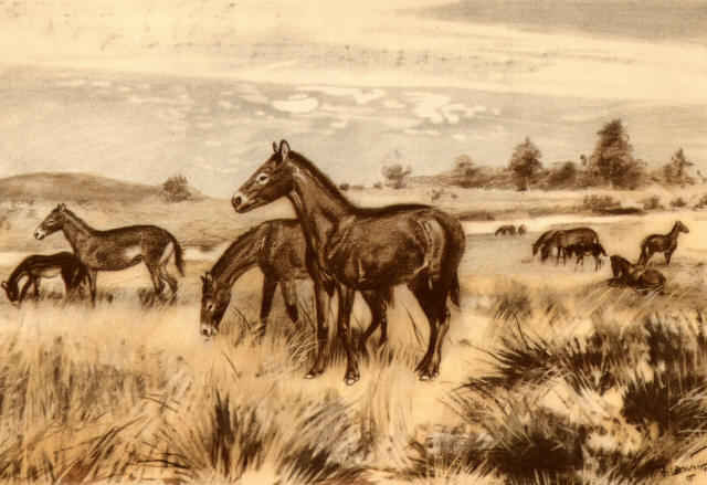 Vintage horses drawing on Western grass plain